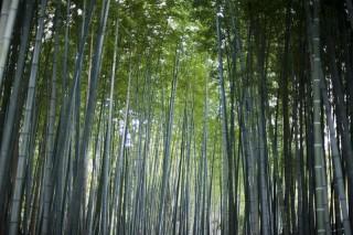 bambusové parkety